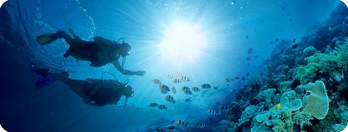 diving[1]